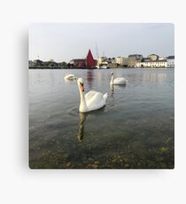 Swans and Galway Hooker On The Corrib, Galway Canvas Print