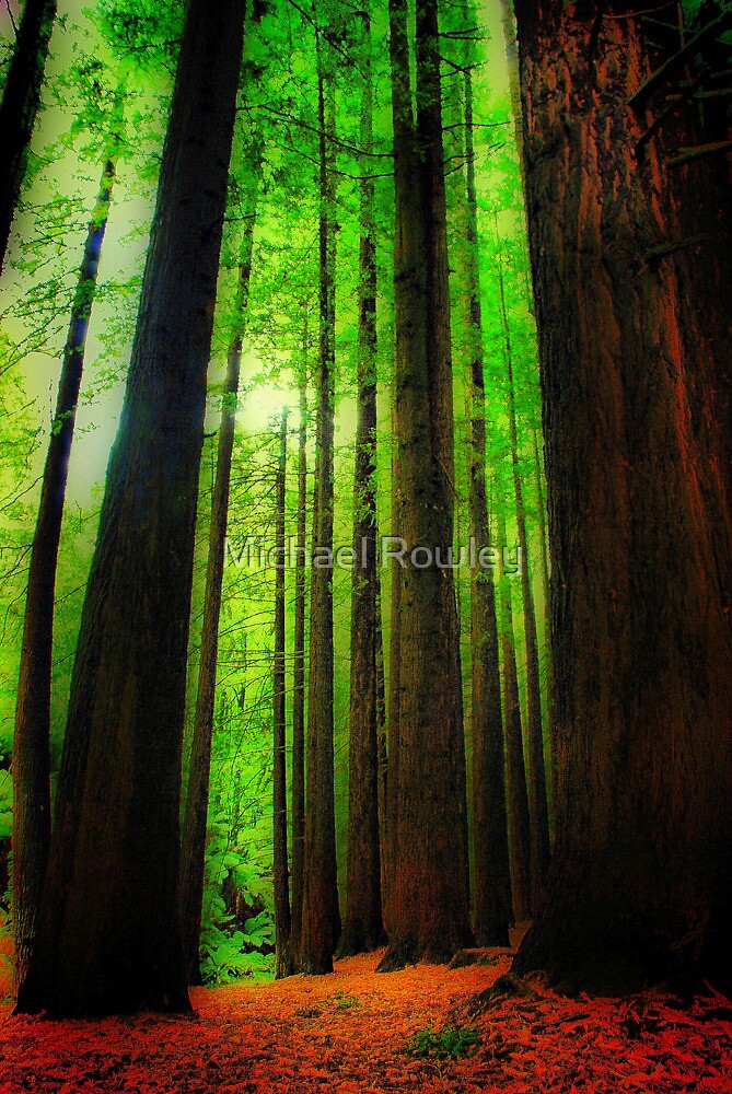 The Red Woods Forrest by Michael Rowley