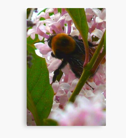 Bee In A Lilac Tree Canvas Print