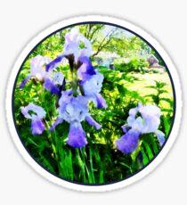 Purple Irises in Suburbs Sticker