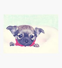 Happiness is sweet puppy breath.  Photographic Print