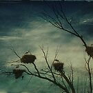 Storks nesting by mariarty