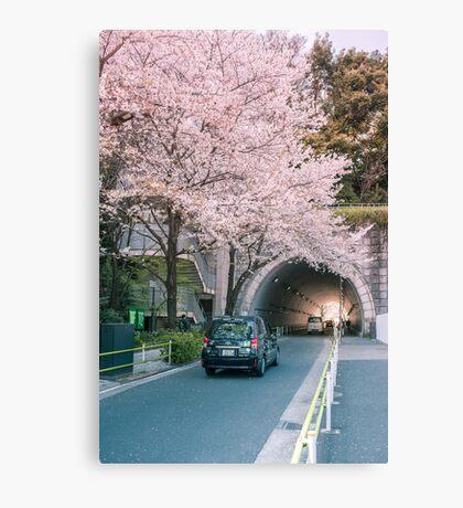 Sakura petals falling Canvas Print