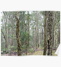 Spotted Gum Poster