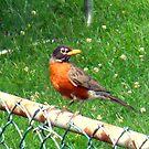 Bird on my Fence by Michael Degenhardt