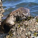 River Otter by Betsy  Seeton