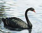 Black Swan by Charlotte Yealey