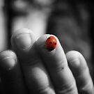 Ladybug, Ladybug Fly Away Home by Avena Singh