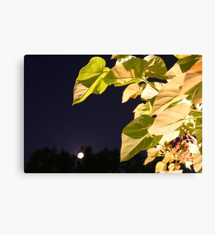 Moony Mood Canvas Print