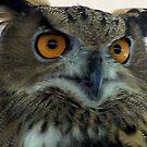 Eurasian Eagle Owl  by Nancy Richard