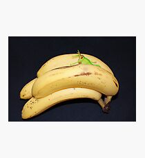Daft Bananas!! Photographic Print