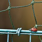 Bird on a Wire by ©FoxfireGallery / FloorOne Photography