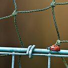 Bird on a Wire by Foxfire