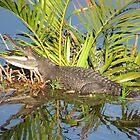 Krokodil von Bernhard Matejka