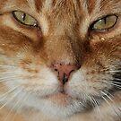 Weeping cat by turniptowers