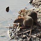 Ratty und Ratty von CreativeEm