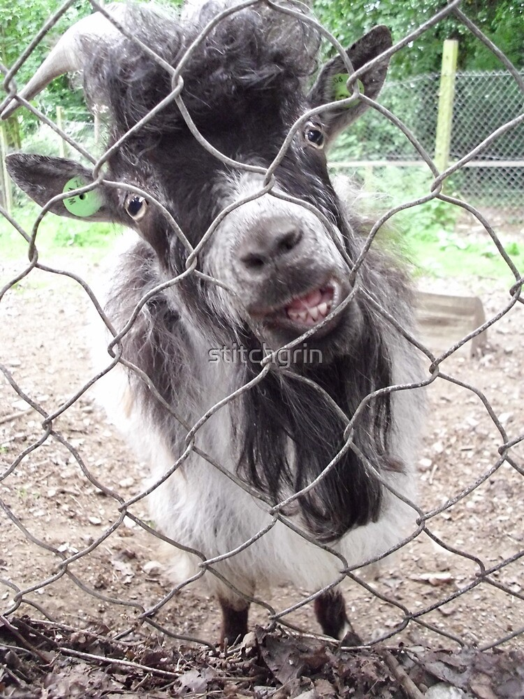 Confused Goat?? by stitchgrin