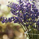 Lavender Bokeh by Rebecca Cozart