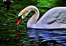 Swan by LudaNayvelt