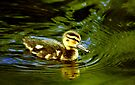 Baby Duck  by LudaNayvelt