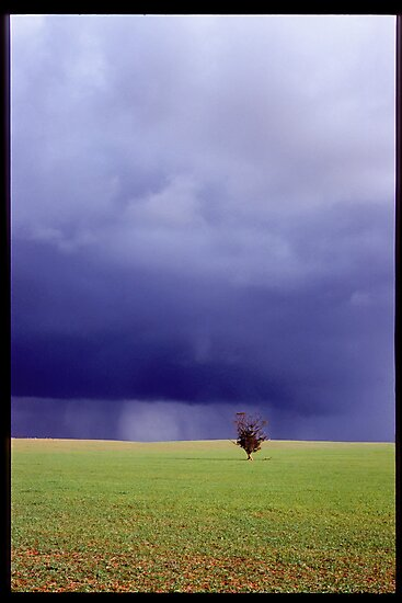 Coming Rain, Mallee by Ty  Mickan
