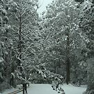 Snowing in Mt Disappointment Forest by Vikki Shedden Photography
