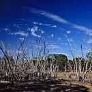 Dead Swamp II by Stephen Mitchell
