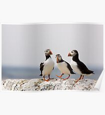 A Puffin Meeting Poster