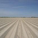 Raw Potato Field by Hans Kool
