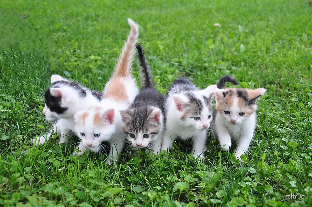 Five little kittens by mltrue