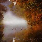 ducks in the mist by DARREL NEAVES