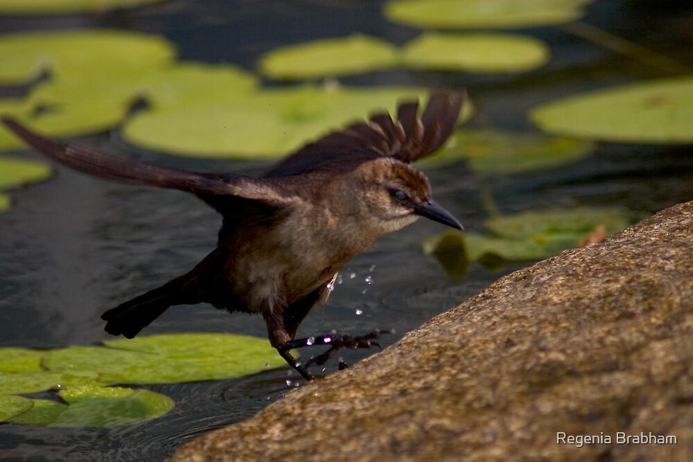 A Female Boat-tailed Grackle by Regenia Brabham