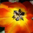 Poppy One by BLAMB