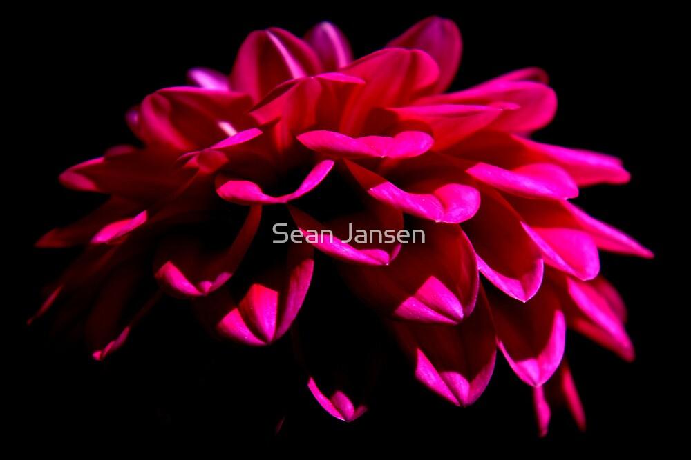 Miscellaneous Photo's 2010 by Sean Jansen