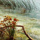 On the lake... by Tamara Travers