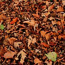 Fallen Leaves by Larry Trupp