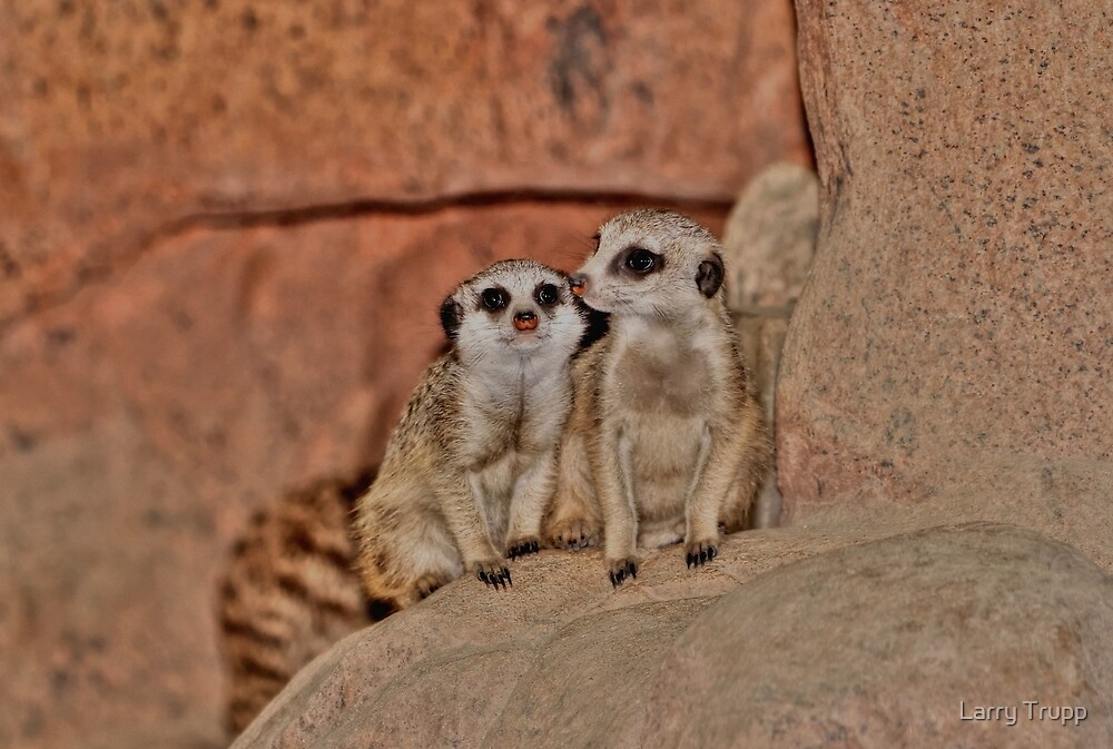 Baby Meerkats by Larry Trupp