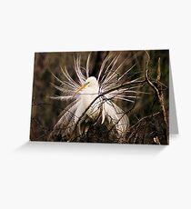 Great White Egret Plummage Greeting Card
