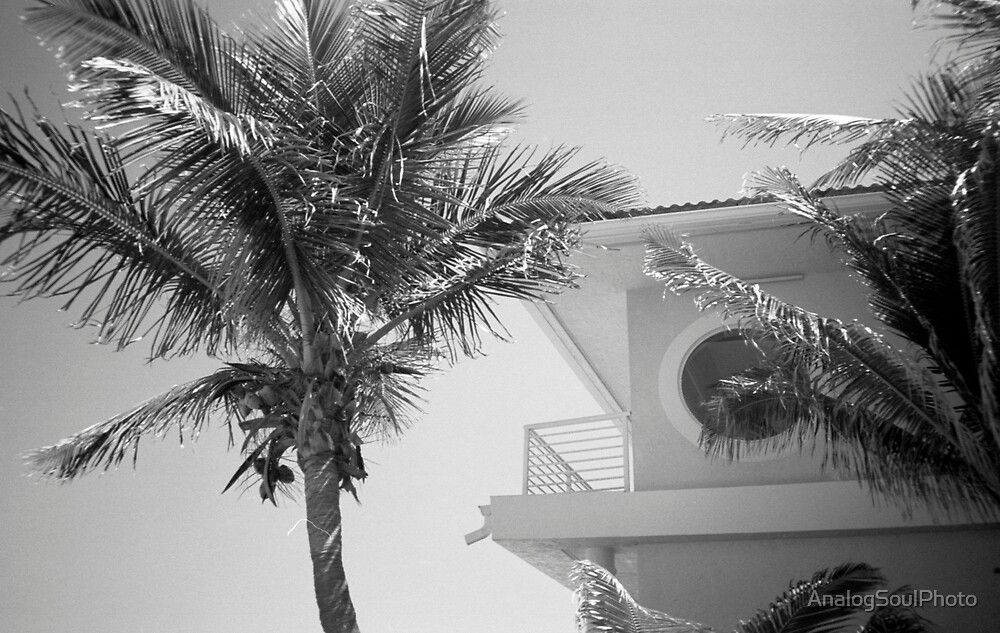 Tropical Blend by AnalogSoulPhoto