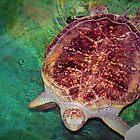 Meeresschildkröte im Aquarium. von ♥⊱ B. Randi Bailey
