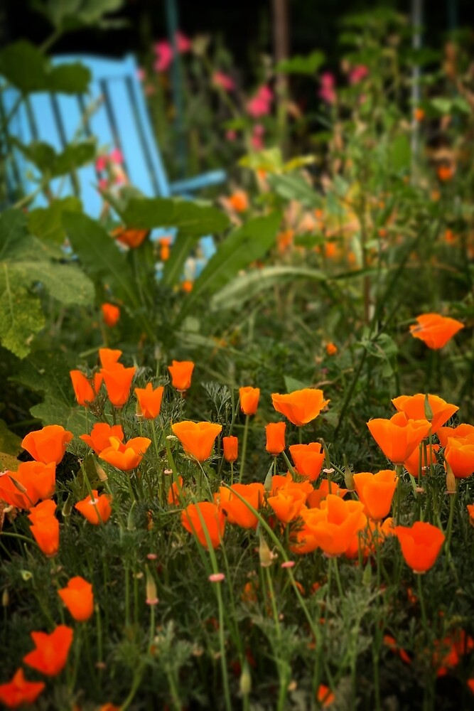 California Poppies In The Garden by Douglas E.  Welch