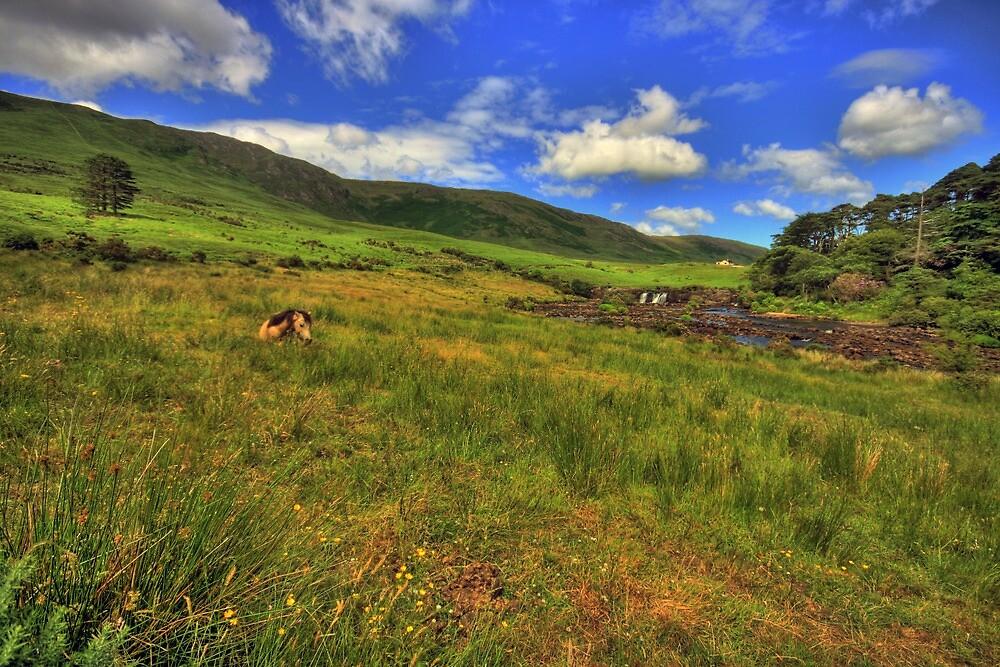 Ashleigh Falls by John Quinn