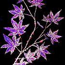 Autumn Magic by Linda Callaghan