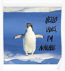 Hello Ladies I'm Available, penguin t-shirt Poster