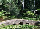 Bridge in the Botanical Gardens by Matthew Walmsley-Sims