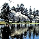 Reflections of spring! by Nancy Richard