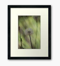 Dandelion Seed Head 3 Framed Print