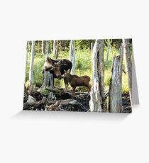 Bull Moose & Baby Moose Greeting Card