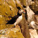 Satisfied Puffin - Farne Island, UK by Derek McMorrine