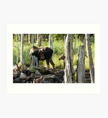 Bull Moose & Little Buddy Art Print